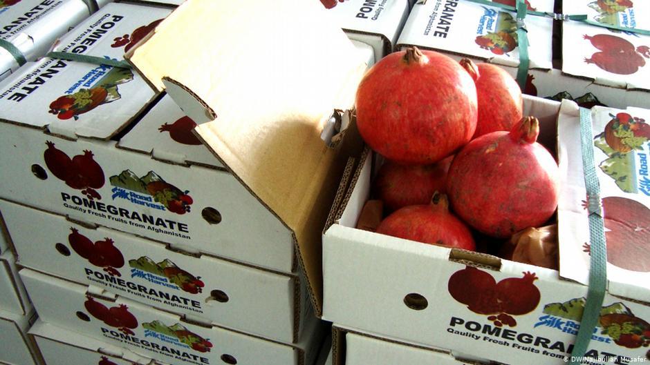 بندر واگه فرصت تازه برای صادرات میوه های تازه افغانستان به هند
